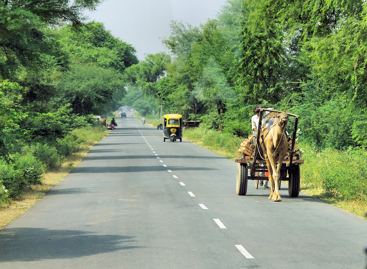 Road in Rajasthan with camel Cart